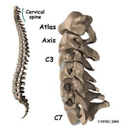 vertebre-cervicale